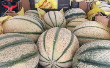 Cantalupo melon
