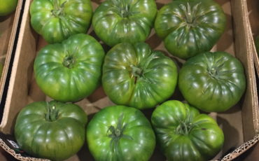 Costoluto tomato